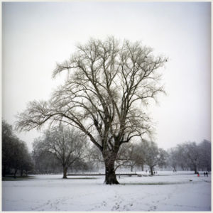 Tadhg Devlin - Trees in winter.jpg